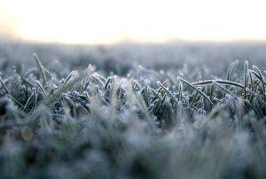 icygrass.jpg